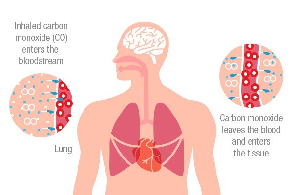 Carbon Monoxide Poisoning: CO Damaging the Human Body